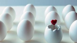 アトラスオオカブトの卵がすべて消滅!なぜ?