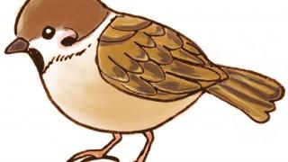 飛べないすずめを保護したら?野鳥を救うための心得