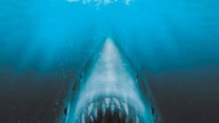 もうサメならなんでもいいの!?恐怖を通り越して笑えるサメ映画たち!