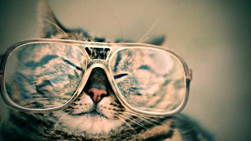 cat-glasses-eyewear-pet-furry-animal-funny-cute